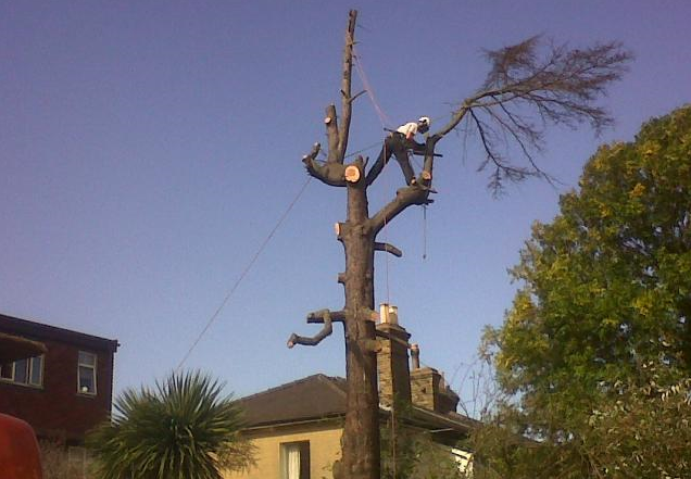 tree-surgeon-Stockport-1