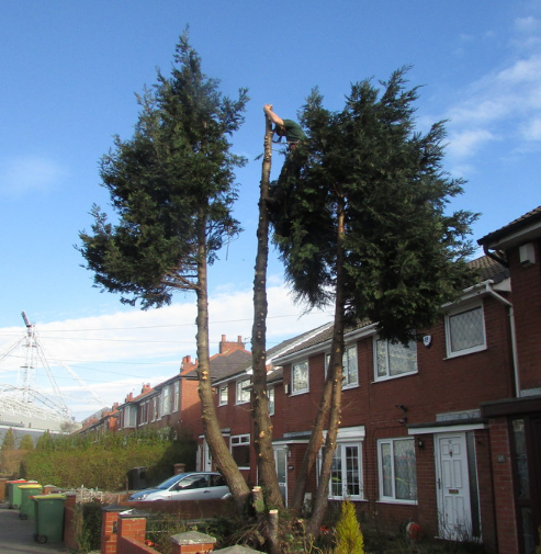 tree-surgeon-Stockport-2