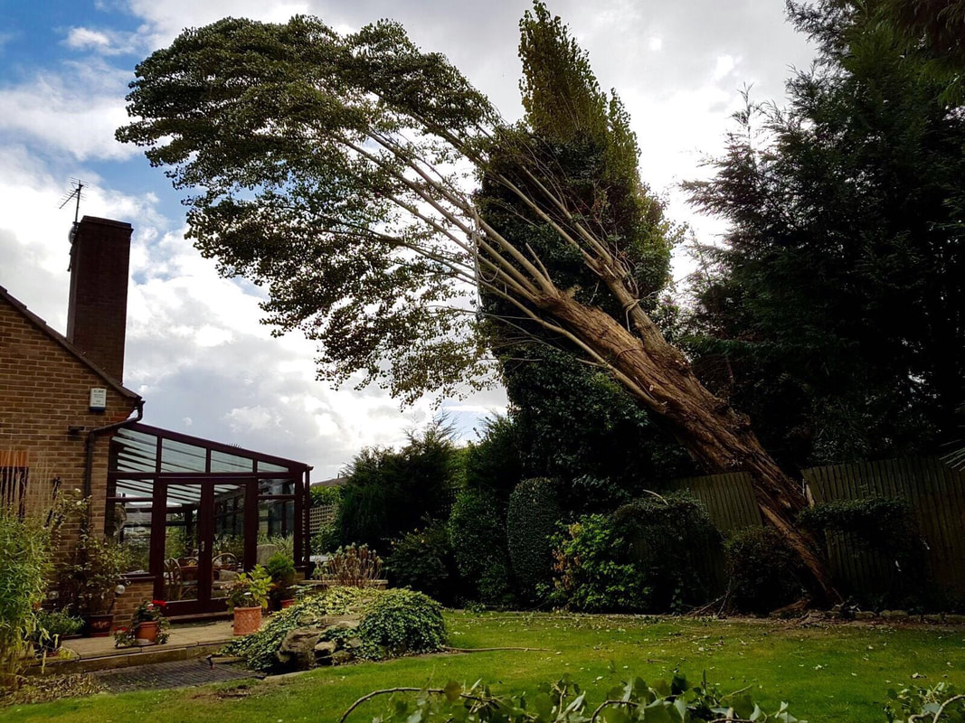tree-surgeon-Stockport-4