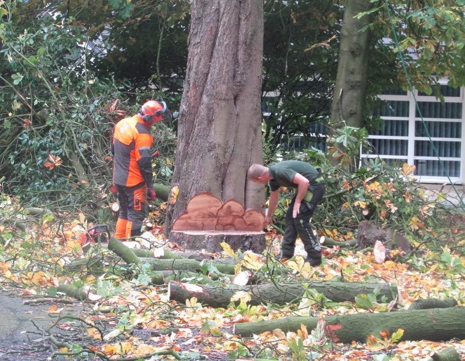 tree-surgeons-Stockport