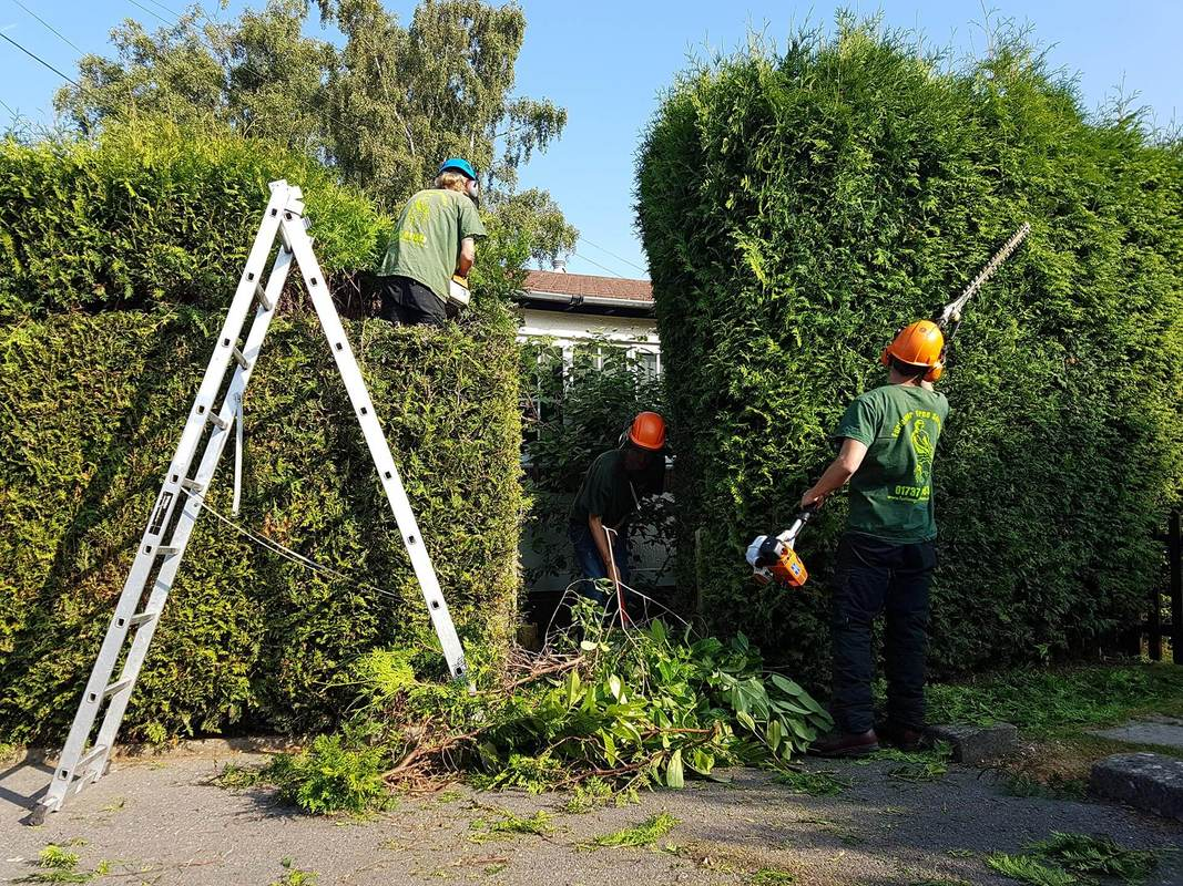 tree-removal-Stockport