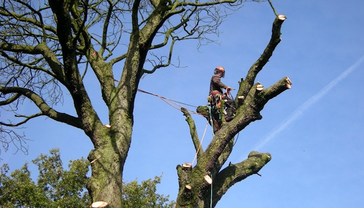 Stockport-tree-surgeon