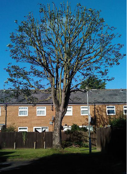 tree-surgeon-Stockport-3