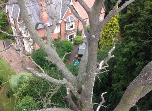 tree-pruning-Stockport